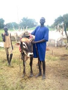 Medici con l'Africa Cuamm Dinka cattle-1